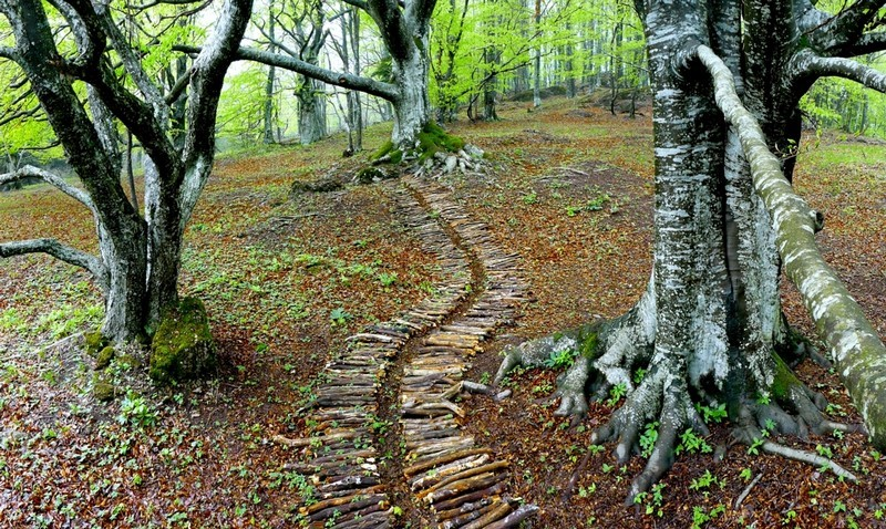 image from Land art - forest